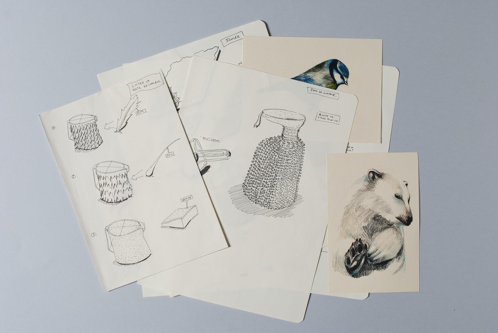 guillian-graves_nautile_drawing-03